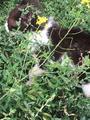 3 милых котенка ищут дом